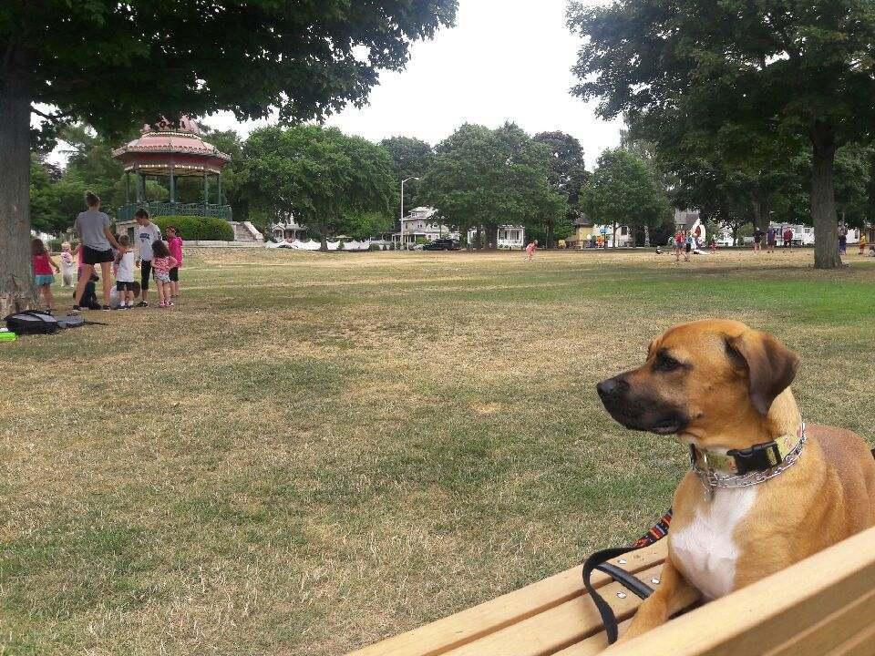 Seo For Dog Training